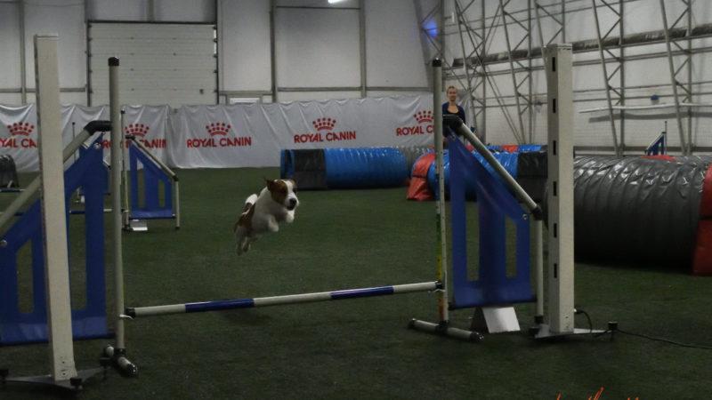 Toimusid  Jack Russell`i terjerite ametlikud agility meistrivõistlused